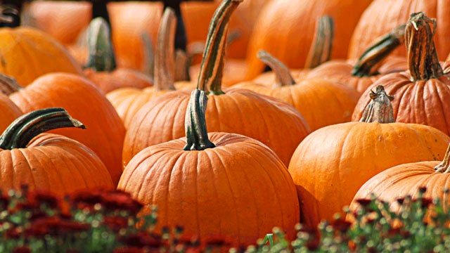 Waterloo Rotary Pumpkin Walk set for October 27th on Oak Island